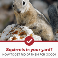 Get Rid Of Squirrel In Yard