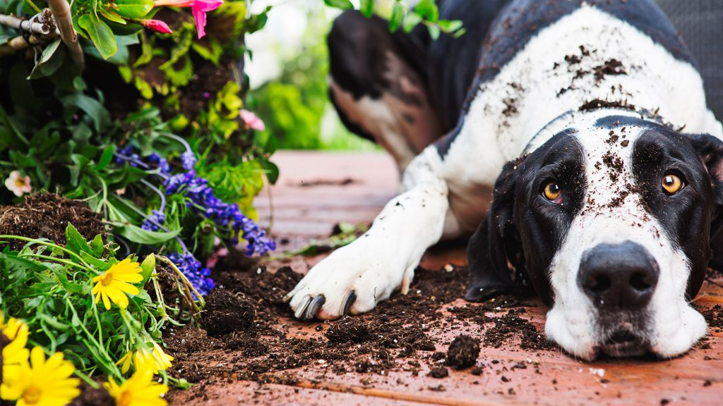Keep Dogs Out Of Flower Beds