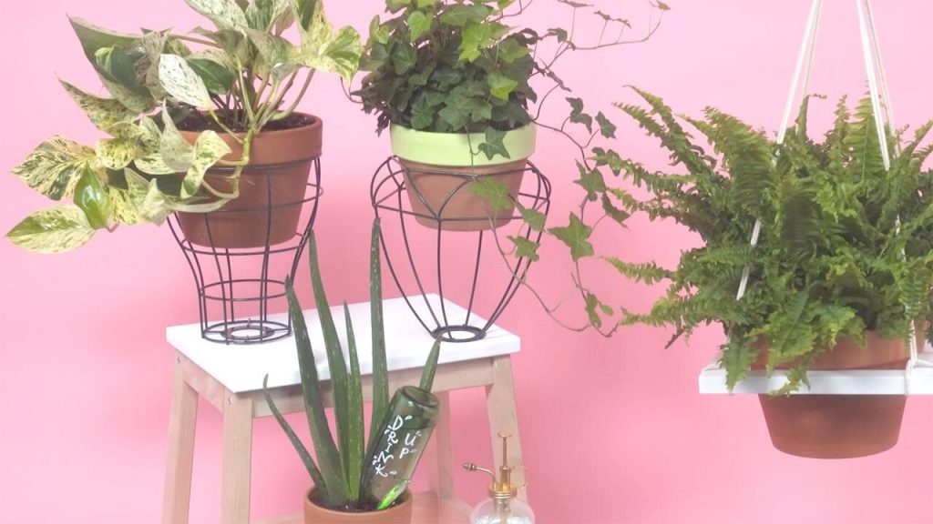 3 Easy DIY for Your Plants